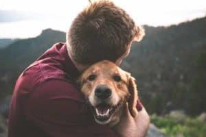 סוגי כלבים חכמים